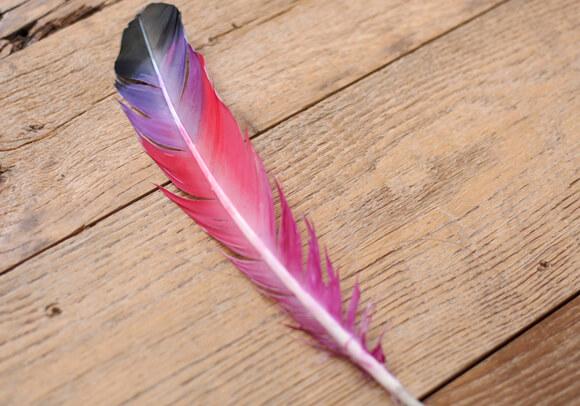 окрашенные перья и узоры для декора